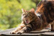 Katzensitter Katzensitting Katzenbetreuung Tierbetreuung vor