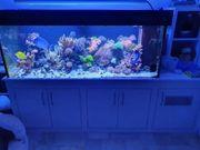 Meerwasseraquarium Meerwasserbecken 1000l komplett mit