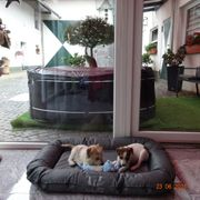 Jack Russell Parson