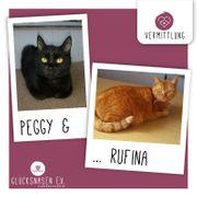 Katzen Peggy und Rufina warten