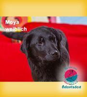Moya - ist neugierig auf dich