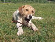 Lucky sucht dich Tierschutzhund