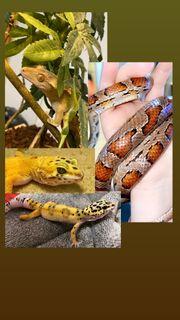 Wir nehmen Reptilien auf