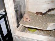 Hamsterkäfig mit Gebrauchsspuren