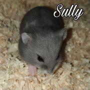 Süße Zwerghamster Babys aus Pflegestelle