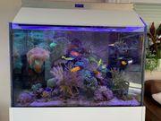 Meerwasseraquarium komplett oder einzeln mit