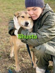 Hündin Shusta sucht ihre Familie