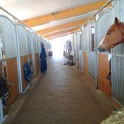 Paddock-Pferdebox zu vermieten in 67311