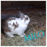 Kaninchen aus dem Tierschutz suchen