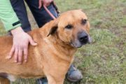 JOSCHKO - ein lieber aktiver Hundesenior