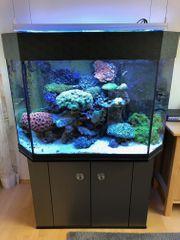 Meerwasseraquarium 447 Liter mit Zubehör