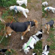 Hundebetreuung wir betreuen Ihren Liebling