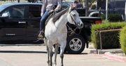 unglaubliches Quarter Horse