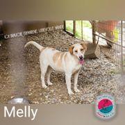 Melly- Ich brauche ganz besondere