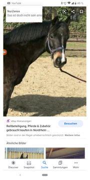 Suche Pflegebeteiligung Pferd und Pony