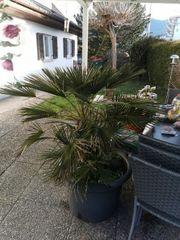 Palme hält hohe Minusgrade aus