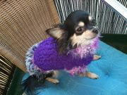 Chihuahua Hundepullis Pelz in S