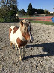 Reitbeteiligung für Pony am Steffelerhof