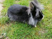 verschiedene kastrierte Kaninchen suchen dich