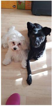 2 liebe junge Hunde