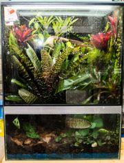 Neues Dendrobaten Terrarium Regenwald Terrarium