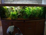 Wasserpflanzen günstig abzugeben