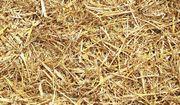 Weizenstroh für Futter Einstreu Kaninchen
