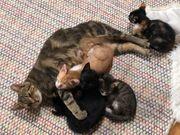 Die wundervolle Katzenmama und ihre