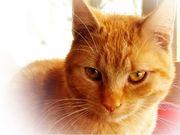 Garfield - Traumkater sucht Traumzuhause