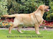 Hurra unsere Labrador Welpen sind