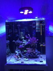 Meerwasseraquarium Dennerle 60l Cube