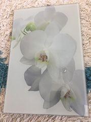 Glasbild Orchidee