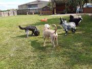 Spielstunde für große Hunde