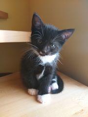 Ein nettes und aktives Kätchen