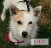 LELA sucht Plätzchen zum Glücklichsein