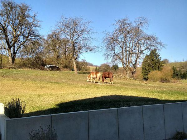 Offenstall Platz für Pferde Pferdepension