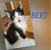 Bert - sucht seine Familie