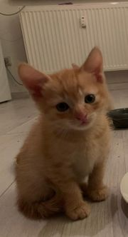 süsses Mix Kitten