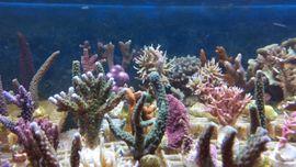 Bild 4 - Korallen Salz Meerwasser Weich und - Freudental