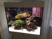 Meerwasser-Aquarium Lido 200 komplett