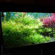 Aquarium Eheim 240l wegen Hobbyaufgabe
