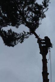 Baumfällung ihren Baum stückweise abtragen