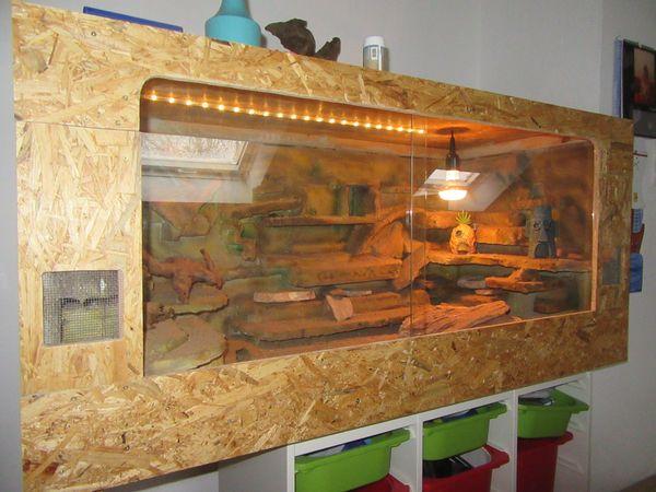 Leopardgeckos (1, 2) mit eingerichtetem Terrarium