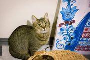 Tina Katze aus dem Tierschutz