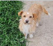 Hundemädchen Goldi