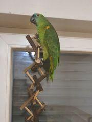 6-jährigen Vogel