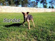 Entdecken Sie mit Sardas gemeinsam