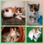 Baby Katze Kitten Tiara sucht