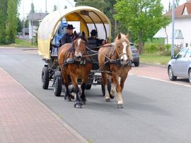 Pferde - Schönes Gespann Arbeitspferde