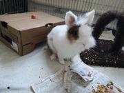 Kaninchen Dame mit Zubehör